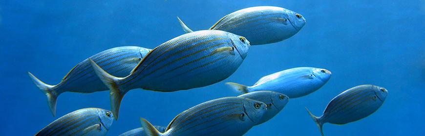 WIN-FISH, un progetto europeo per il benessere dei pesci negli allevamenti ittici