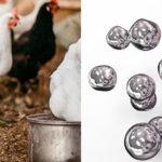 Nanoparticelle d'argento nel pollame: un rischio per il consumatore?