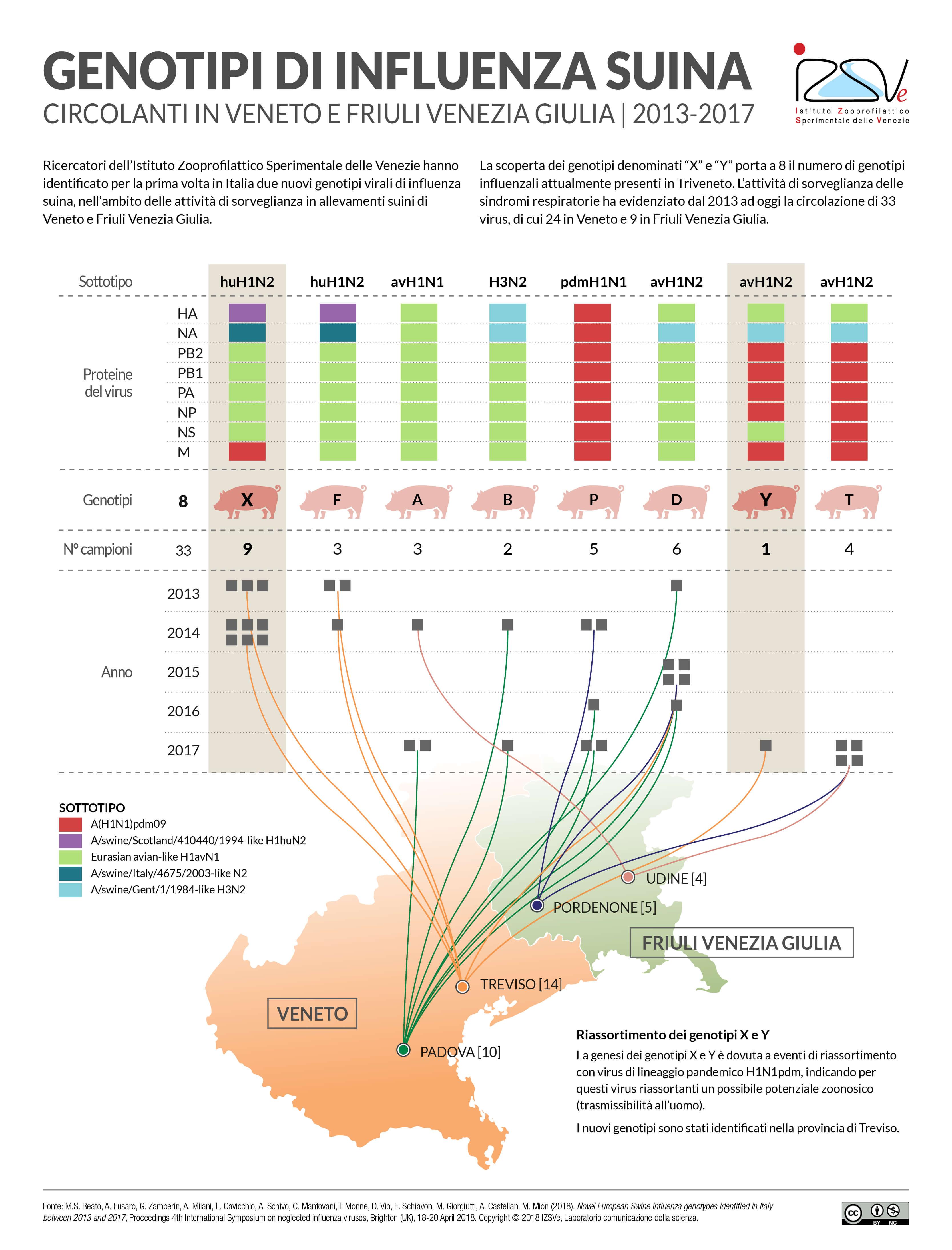 Genotipi di influenza suina - Infografica