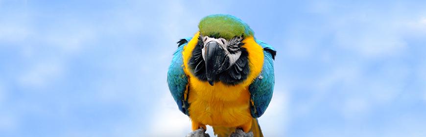 Appunti di scienza: uccelli ornamentali [Opuscolo]