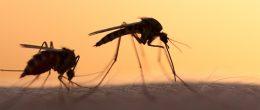 Malattie da vettori vecchie, nuove, emergenti