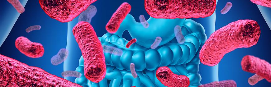 Maggiore quantità di geni di antibiotico resistenza nel microbiota di onnivori e vegetariani