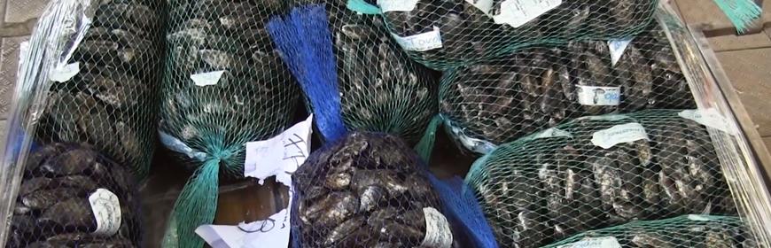 Progetto Vivaldi Ricerca Italiana Molluschicoltura Europea 2