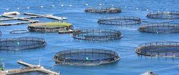La lotta ai patogeni nel settore ittico, tra identificazione di microrganismi e sviluppo di metodi diagnostici