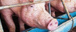 Linee Guida in Veterinaria: il Complesso della Malattia Respiratoria del Suino (PRDC) [Manuale]