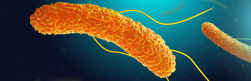 Sierotipi emergenti di Salmonella, il successo epidemiologico della variante monofasica di S. Typhimurium