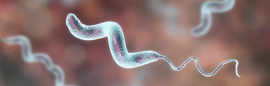 Zoonosi e tossinfezioni alimentari in Europa: Campylobacter e Salmonella stabili da 5 anni