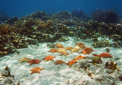 Fondale Oceano Atlantico