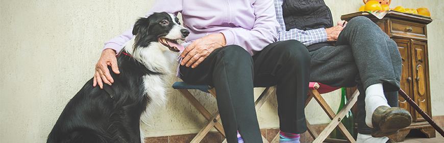 Conferenza a Parigi sugli Interventi Assistiti con gli Animali nelle residenze per anziani