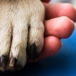 Gli interventi assistiti con gli animali sulle «Storie di Radio1»