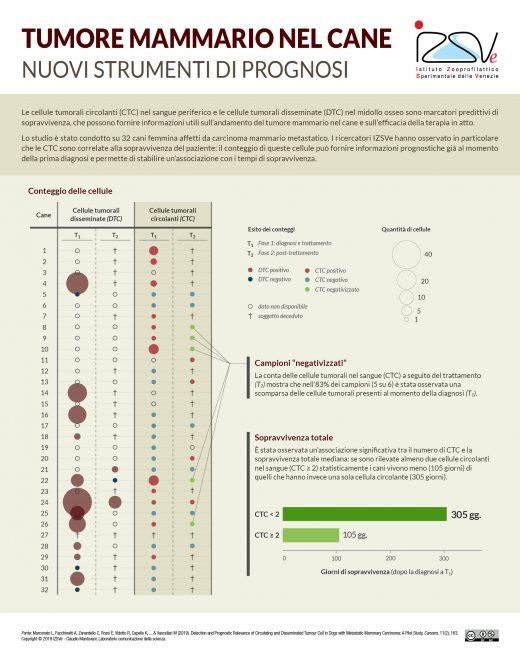 Nuovi strumenti per la prognosi del tumore mammario nel cane [Infografica]