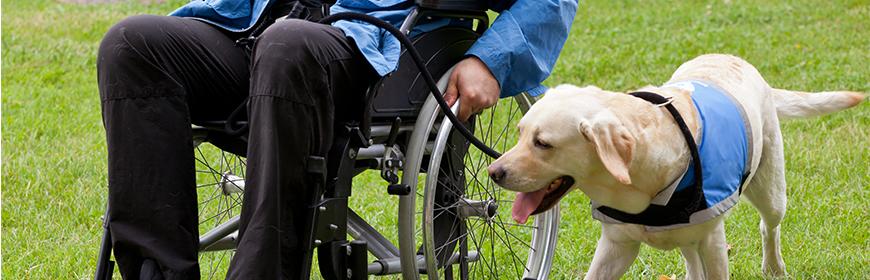 Relazione annuale 2018 del Centro di referenza nazionale per gli Interventi Assistiti con gli Animali