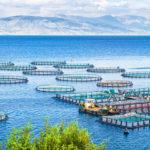 AdriAquaNet, un progetto per il rafforzamento e la sostenibilità dell'acquacoltura nel Mare Adriatico