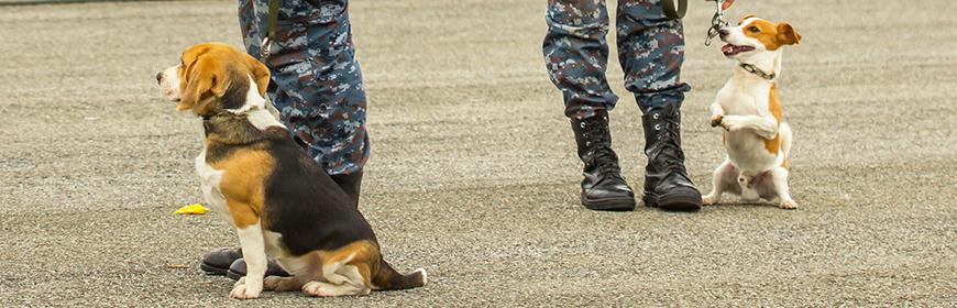 Interventi assistiti con gli animali, svolto a Roma un corso per il personale militare
