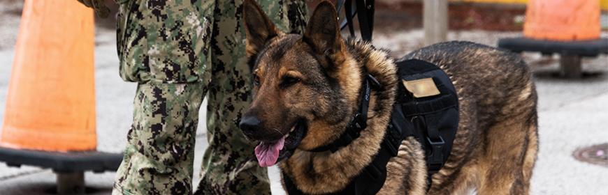 Interventi assistiti con gli animali, svolto a Roma il primo corso per le forze armate italiane