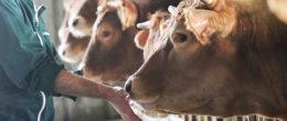 Ricercatori dell'IZSVe premiati per uno studio sugli effetti del clenbuterolo nel fegato bovino