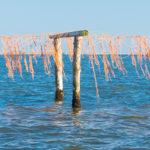 SO.SI.A.Q. Un progetto integrato di ricerca industriale per l'innovazione della filiera molluschicola del Veneto
