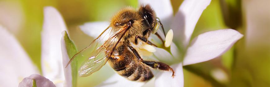 """Convegno """"Per la salute delle api"""", sabato 18 gennaio 2020 a Legnaro (PD)"""