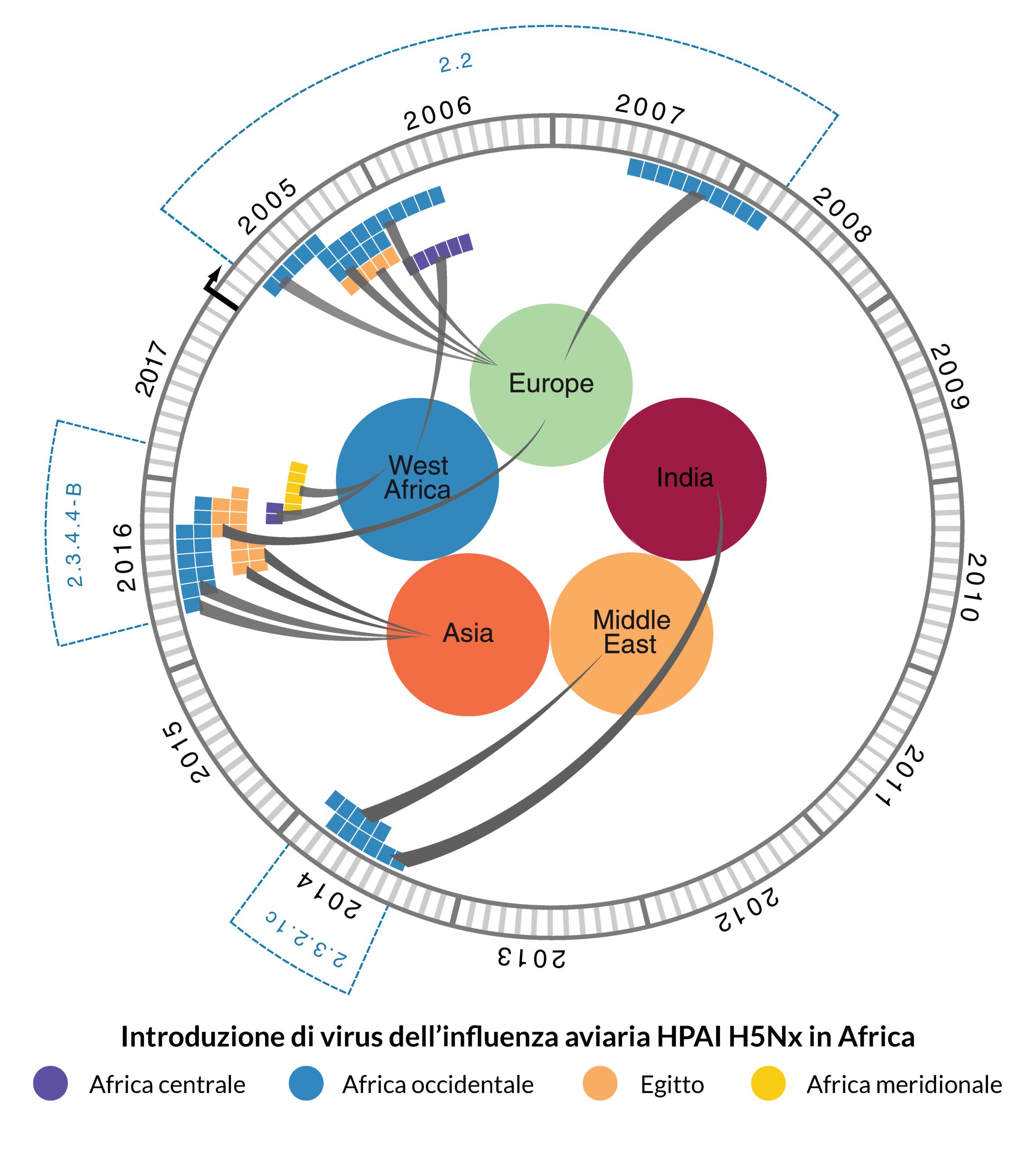 Introduzione di virus dell'influenza aviaria HPAI H5Nx in Africa