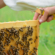 Intervento di aggiornamento annuale per tecnici apistici 2020