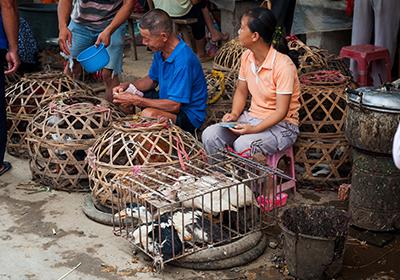 mercato di animali vivi in Cina