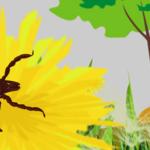 Corso ECM online / Artropodi vettori di patogeni per l'uomo e gli animali: zecche