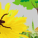 Corso ECM online / Artropodi vettori di patogeni per l'uomo e gli animali: le zecche