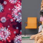 Nuovo Coronavirus e animali da compagnia: domande frequenti e informazioni utili