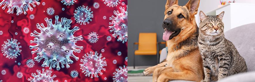 Coronavirus e animali da compagnia: domande frequenti e informazioni utili