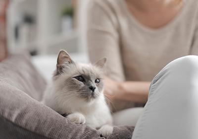 gatto in salotto