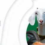 LIDISKI: un progetto europeo di cooperazione e sviluppo per il controllo delle malattie del bestiame in Nigeria