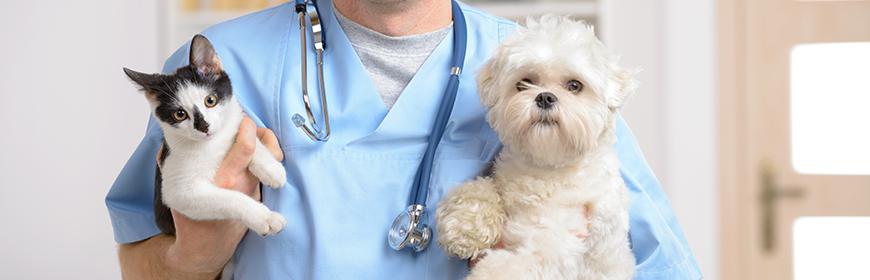 Banca del sangue IZSVe: per i veterinari