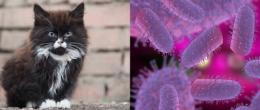 Caso di Lyssavirus in un gatto nel comune di Arezzo