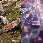 Come cambia la variabilità genetica degli ovini in seguito alla selezione per migliorare la resistenza alla scrapie