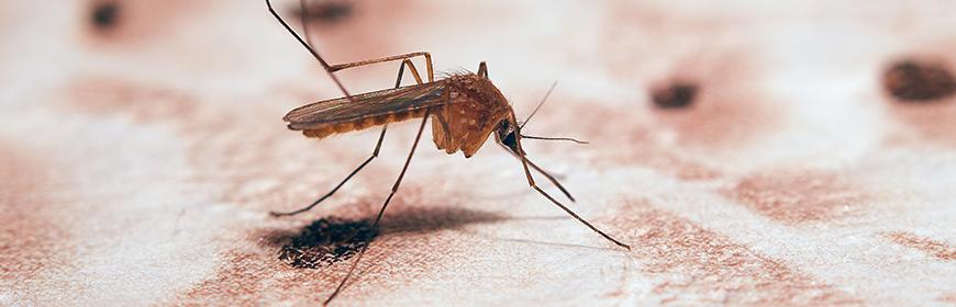 West Nile Disease