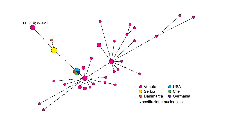 Figura 2. Network genoma SARS-COV-2 Luglio 2020