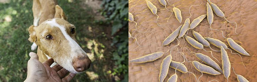 Leishmaniosi canina sui Colli Euganei: la prevenzione funziona