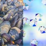 Molluschi bivalvi: sentinelle del bioaccumulo di nanoparticelle?