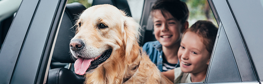 Come viaggiare in auto con i nostri animali?