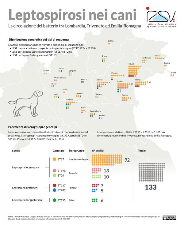 Leptospirosi, epidemiologia Nord Est Italia infografica