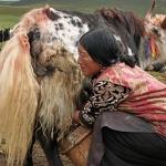 Cooperazione e veterinaria, un'opportunità per il futuro