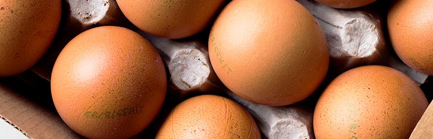Cosa indica il codice stampato sul guscio delle uova? [Video]