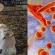 Il rischio di infezioni da micoplasmi nei vitelloni importati dalle fattorie di ingrasso