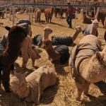 IZSVE | Vétérinaires Sans Frontières International