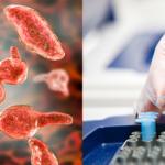 Nuova tariffa per analisi RT PCR per <em>Mycoplasma gallisepticum</em> e <em>Mycoplasma synoviae</em> eseguite nel medesimo campione
