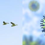 Caratterizzazione genetica e analisi spaziale dei virus HPAI H5Nx identificati in Europa tra il 16 ottobre e il 24 novembre 2020