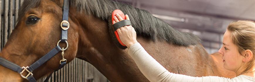 Il contatto con persone famigliari modula il battito cardiaco del cavallo
