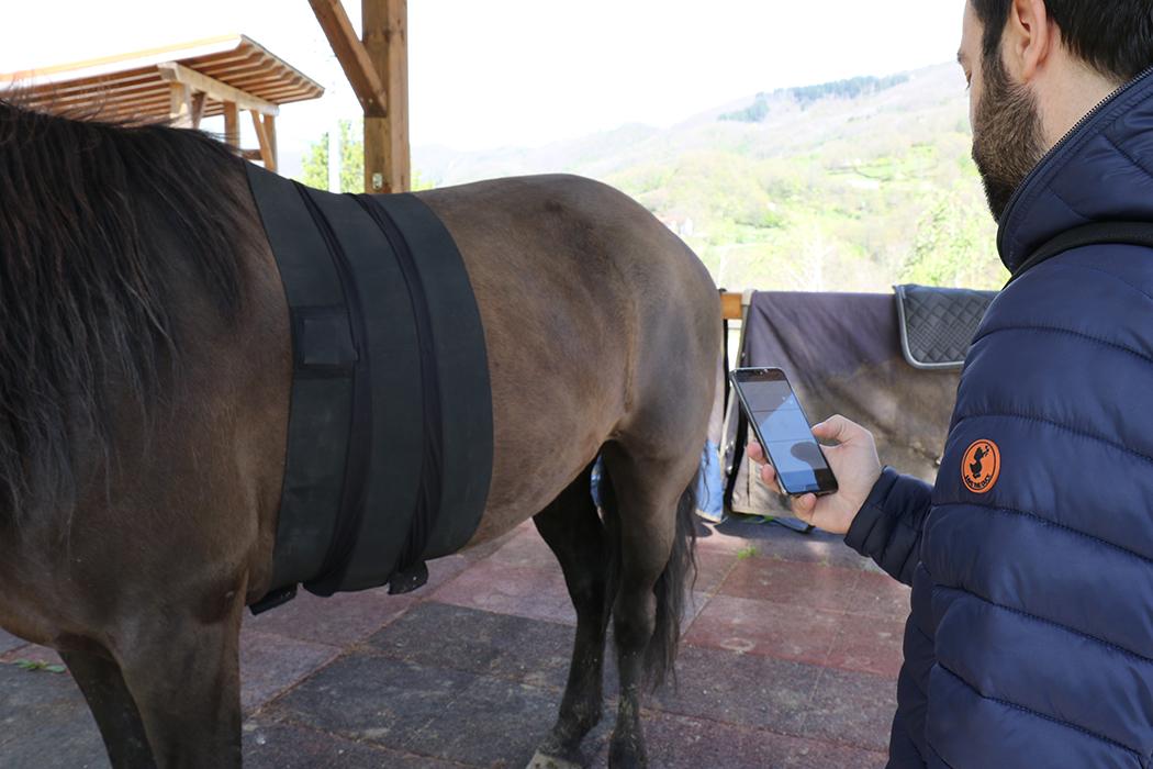 IAA Battito cardiaco cavalli / Foto 2
