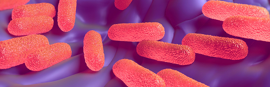 Campylobacter e Salmonella nell'UE, casi stabili da 5 anni