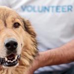 Zoonosi nelle strutture di ricovero per cani e gatti, progetto di ricerca per un'efficace gestione del rischio
